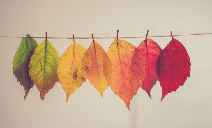 秋に美白するメリットとは