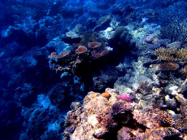ミネラルたっぷりのサンゴ水