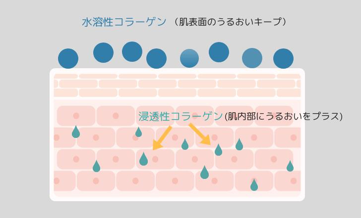 水溶性コラーゲンと浸透性コラーゲン